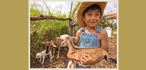 Lahaina Animal Farm